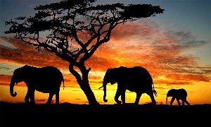 Les six aveugles et l'éléphant